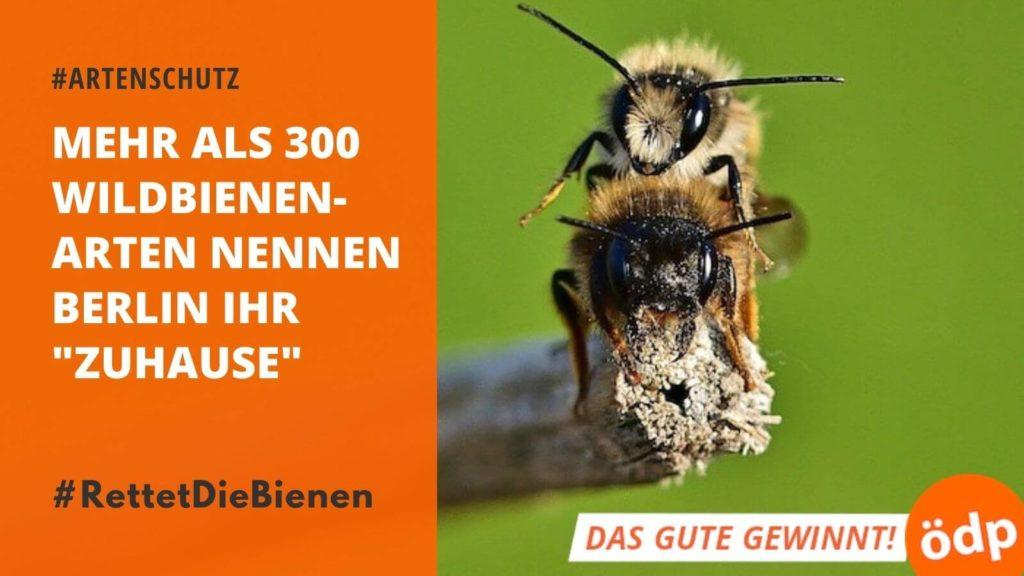Bienen in Berlin Retten - Hagen Albers ins Berliner Abgeordnetenhaus